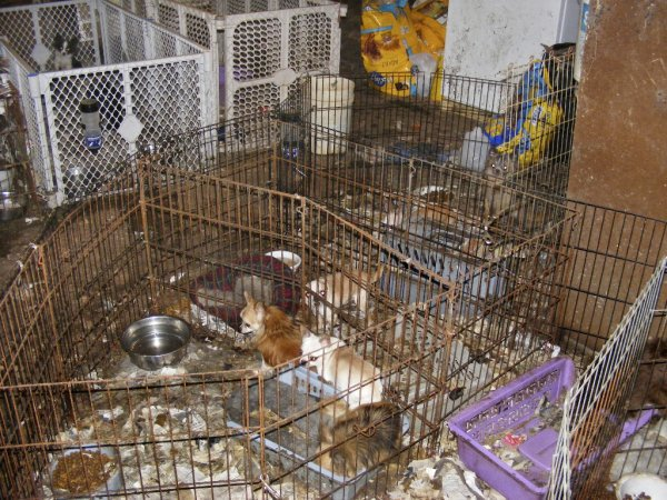 La misérables vie des chiots/chiennes des usines à chiot ! Pétitions et explications :