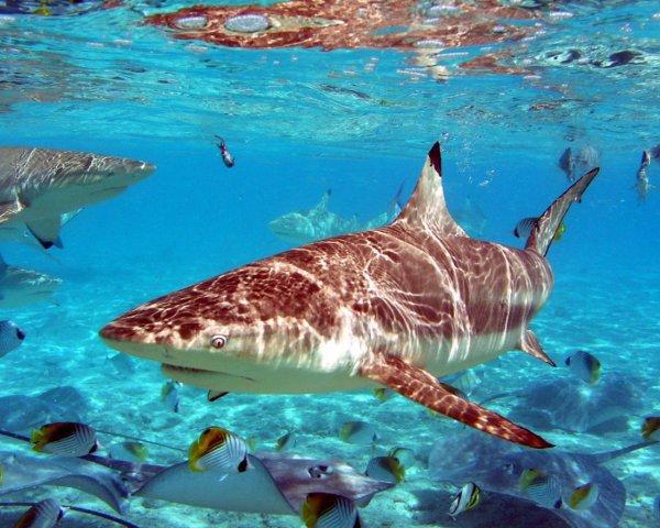 Non à la chasse au ailerons de requin !!! (Photos choquantes, Âmes sensibles s'abstenir)