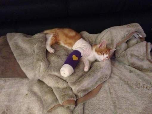 Farid, un *** qui torture un chaton de 5 mois !!! Pétition !