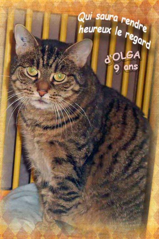 Olga vit au refuge depuis longtemps... trop longtemps. Adoptez-la ! ♥