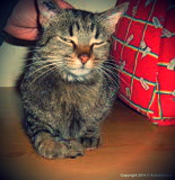 Joy, petite chatte à adopter ! ♥