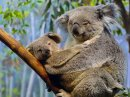 Photo de x-ma-vie-de-Koala-x
