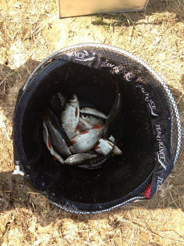 Petite journée de 6h de pêche a l'anglaise