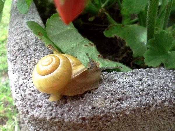 Escargot ♥.