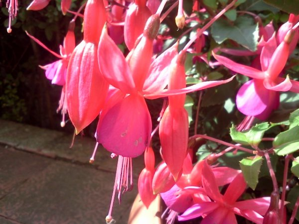 Fleurs ♥.