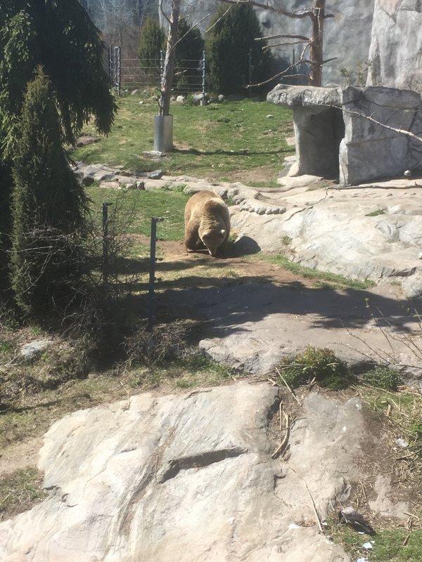 Zoo d'Helsinki