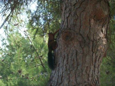 ecureuille