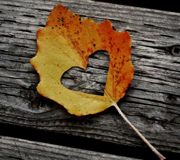 l'automne balaye tout sauf nous