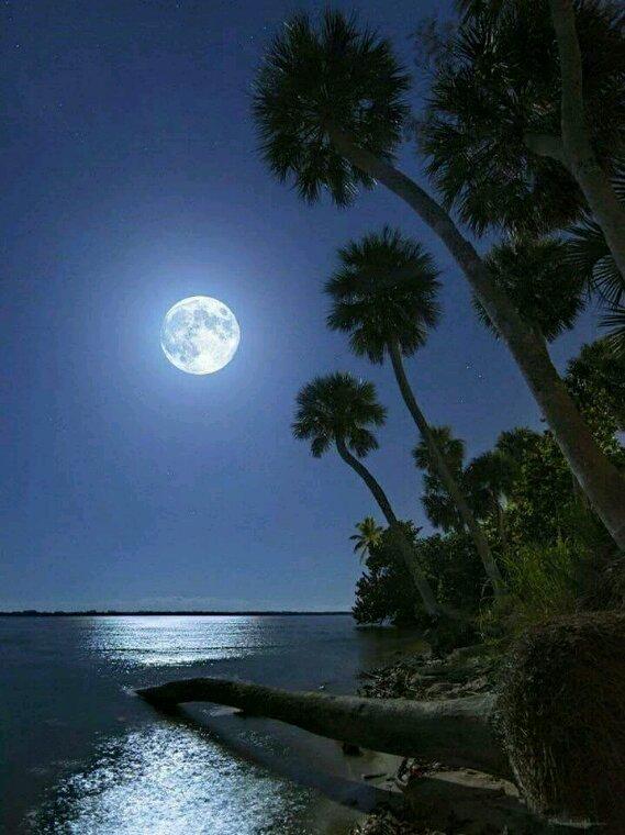 Nuit de pleine lune ne laisse a rêver de toi  .
