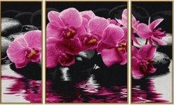 SAL Orchidée