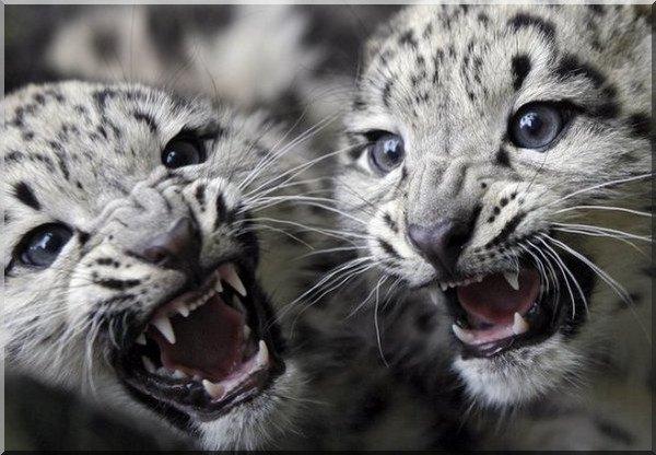 Bébés aux Dents Très Pointues !!!