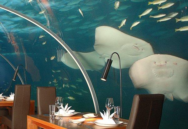 Le Restaurant de mes Rêves !!!
