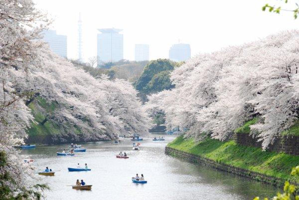 Le Japon Au Cours de L'eau