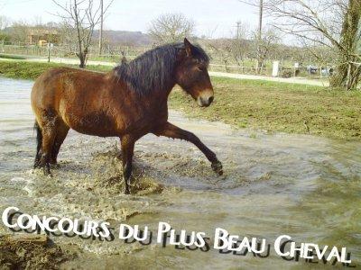 ~ Concours Du Plus Beau Cheval :) ~