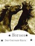 Photo de Des-Concours-Equin