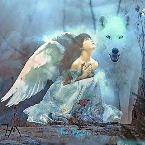 L ange au coeur briser a l âme sauvage du loup