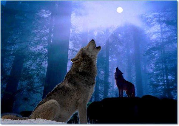 C'est en un chant du loup que les murmures de la douce mélodie se fait entendre dans l'immense forêt elle qui traverse la lumière de la lune et en fait disparaitre la brume Toute la vallée et dévoilé et d'une sinistre noirceurs on y découvre un tout autre paysage. Angel-090