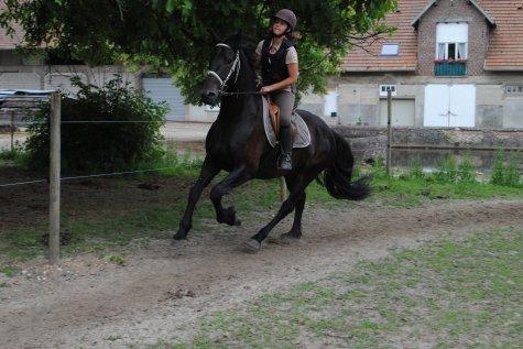 Un cheval en Or & certainement l'Homme de ma Vie