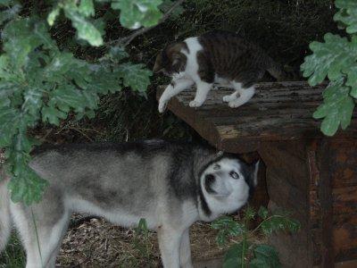Foxie, Baïka, Caline