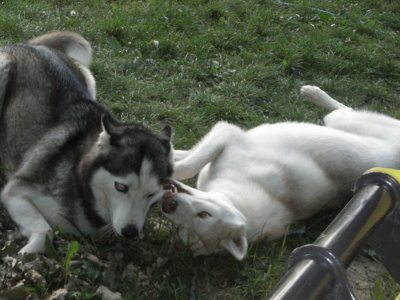 Baïka et Foxie