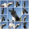 equine-photography