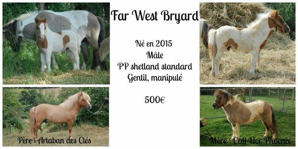 Far West Bryard