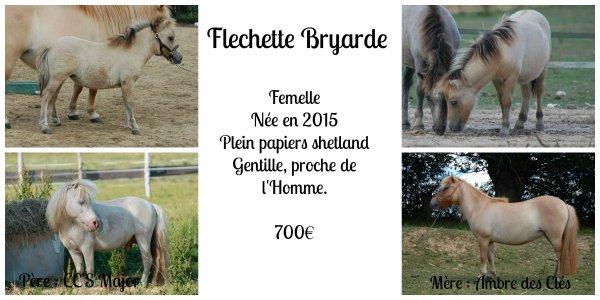 Fléchette Bryarde