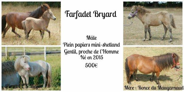 Farfadet Bryard