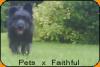 PetsxFaithful