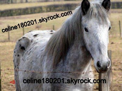Un amour de cheval <3