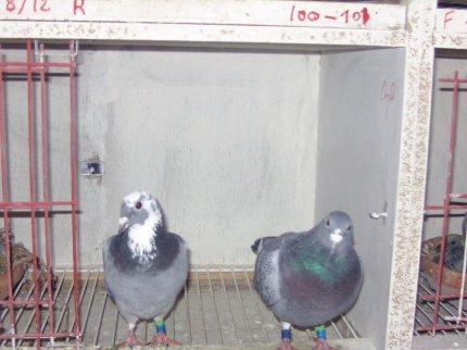 L'élevage 2012