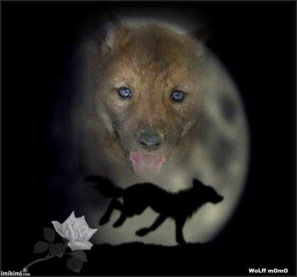 jolie loup