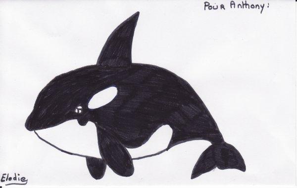 dessin fait part moi orque dedicasse a antho