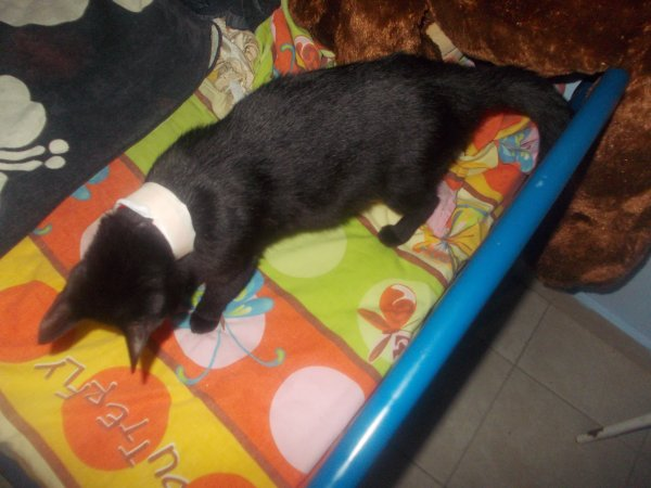 my pregant (and wounded?) kitten : miss Raeka!
