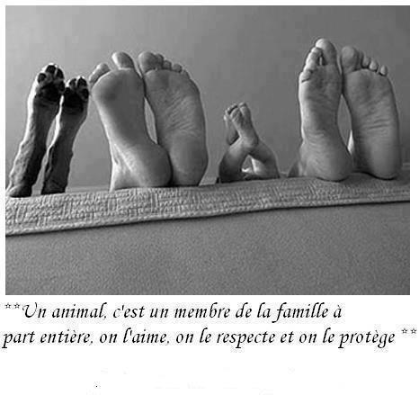 Quel place donnez vous à vos animaux?