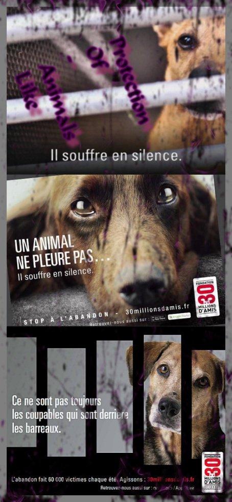 UN ANIMAL NE PLEURE PAS IL SOUFFRE EN SILENCE