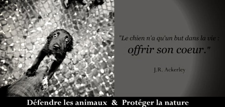 CITATION EN IMAGES