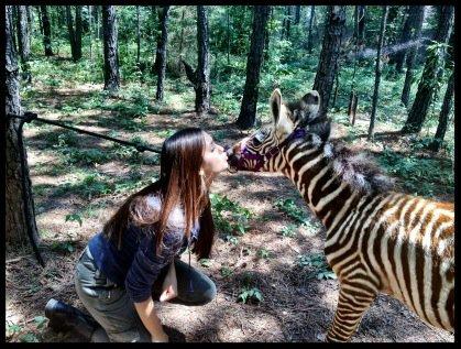 Tweet de Nina posté avant-hier (23 juillet 2012)  *Rencontrez le nouvel amoureux d'Elena... Le plus jeune des frères Salvatore*