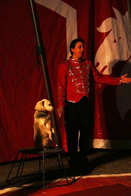 volte le petit chien savant un numéro simple ou on retrouve la complicité entres l'homme et le chien