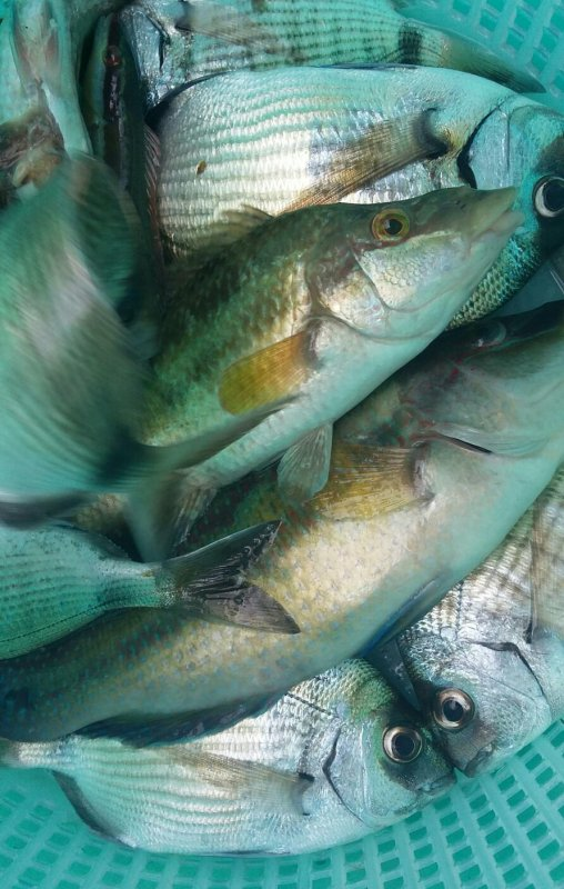 Une super  journée  a la pêche