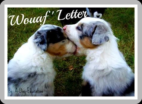 Wouaf ' Letter  :