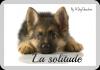 Apprendre à son chien à rester seul :
