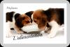 L'alimentation du chiot/chien :