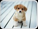 Photo de A-Dog-Education