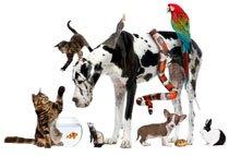 Suite de choisir son animal : Checklist avant l'achat ou l'adoption !