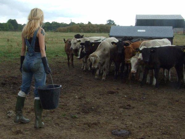 La fermière et ses vaches