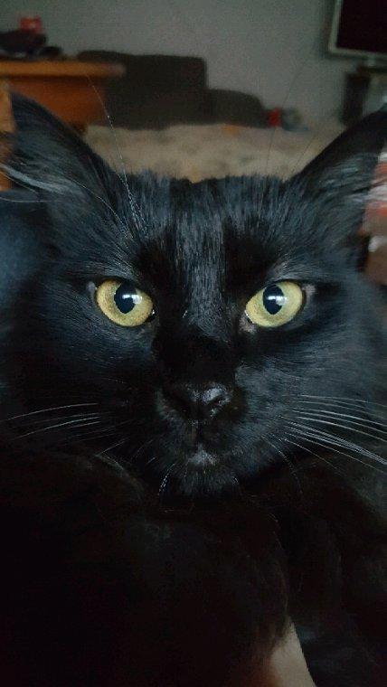La tête de mon chat :p