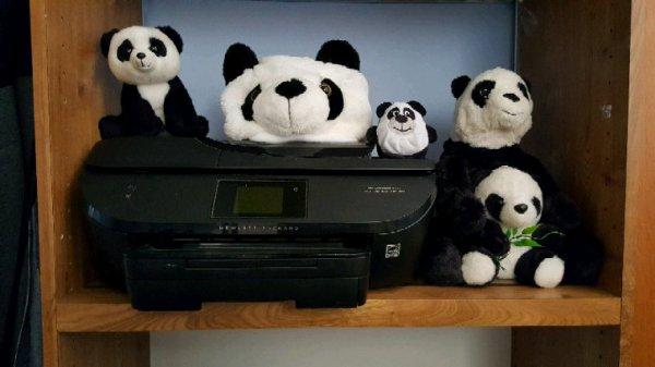 Petit délire avec les panda ??
