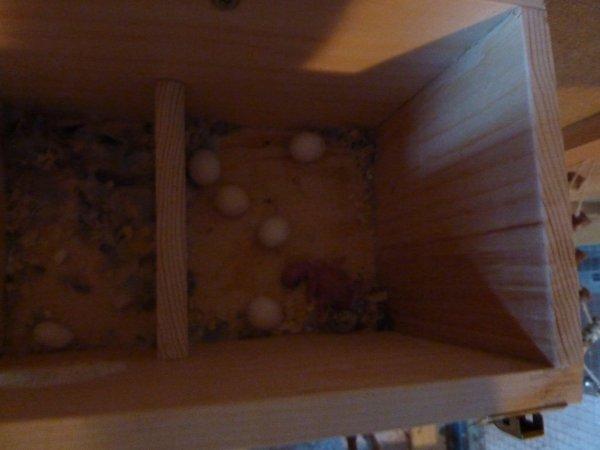 Mon 1er perruchon ! :D