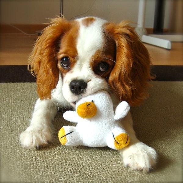Mon Pt chien d'amour à moi....